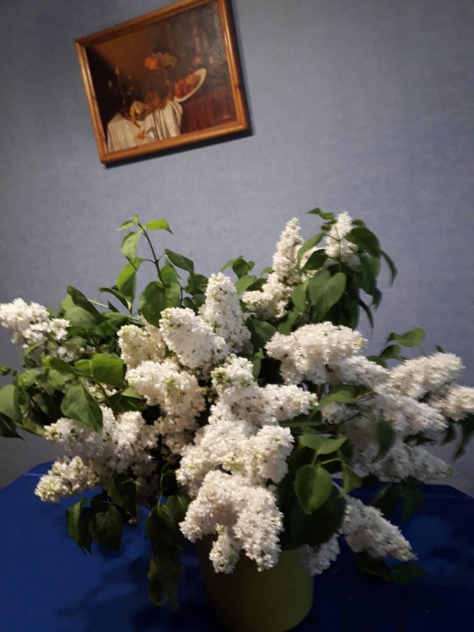 5 ком Маршала Василевского